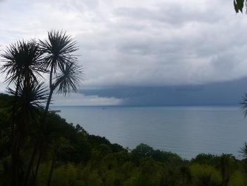 M. Czarne i ogród botaniczny - roślinność Nowej Zelandii