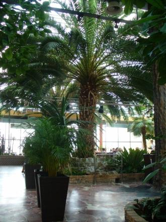Wnętrze zielonogórskiej palmiarni
