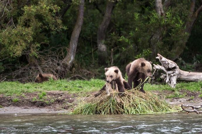 Małe niedźwiadki