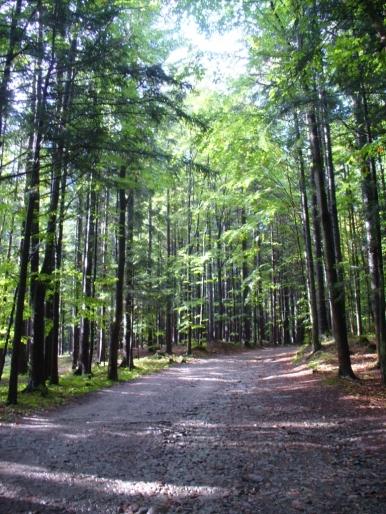 Początek zielonego szlaku z Zawoi Markowej do Markowych Szczawin
