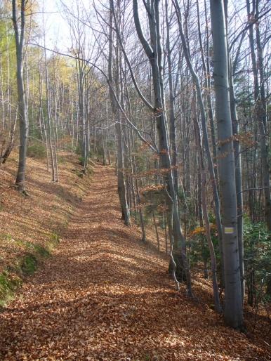 Jesienny szlak w pobliżu Cebulówki