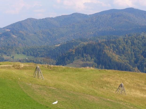 Widok na Pasmo Radziejowej ze szlaku Jaworzynka - Dzwonkówka, zdjęcie wykonano 30 IX 2008
