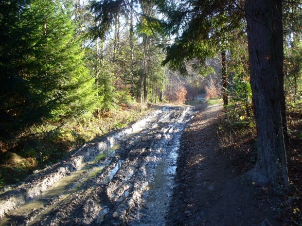 Szlak z Dzwonkówki do Szczawnicy