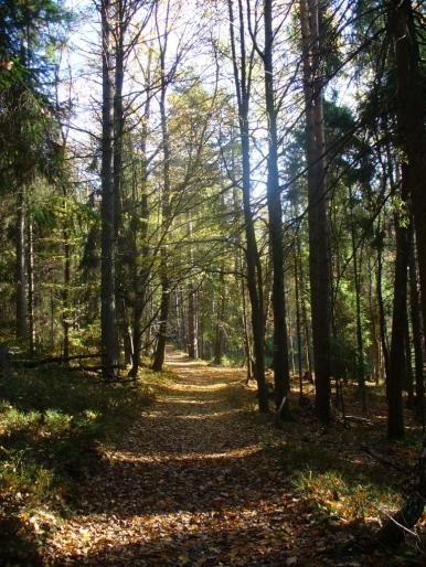 Żółty szlak na Działek jesienią