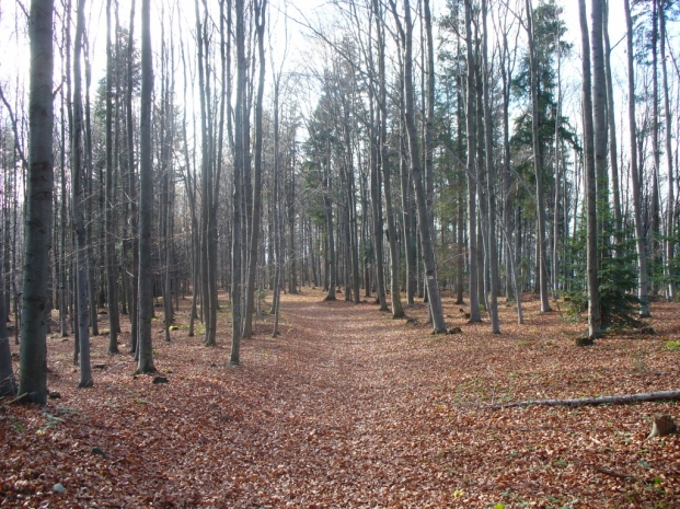Początek szlaku z Łysiny do Lubnia