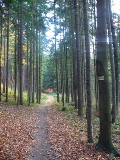 ...a potem tylko las.
