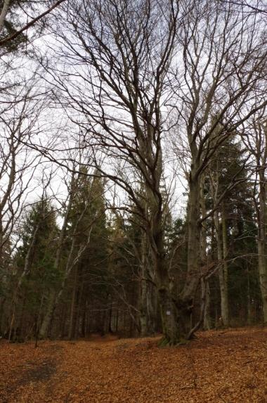 Podejście na Suchy Wierch