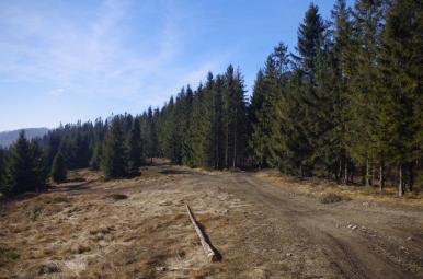 Na szlaku z Ostrego na Magurkę Wiślańską