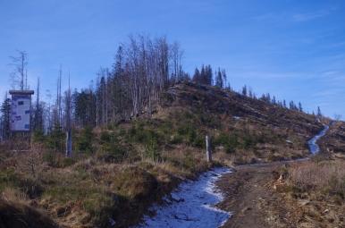 Na szlaku z Ostrego na Magurkę Radziechowską - Muronka
