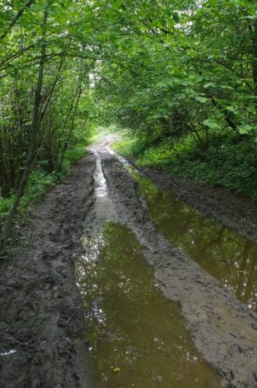 Droga z Wernejówki do Surowicy