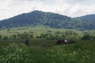 Prace polowe w okolicy Jaślisk