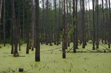 Las w okolicy Wilczego Szańca