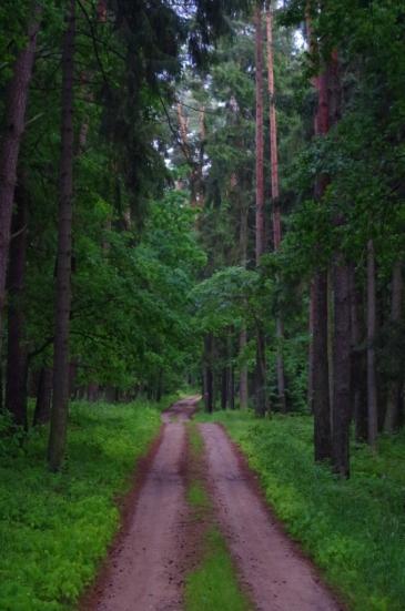 Las w okolicy Niedźwiedziego Rogu