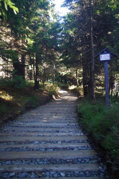 Na szlaku z Jaworzyny Kamienickiej na Turbacz, 19 X 2014