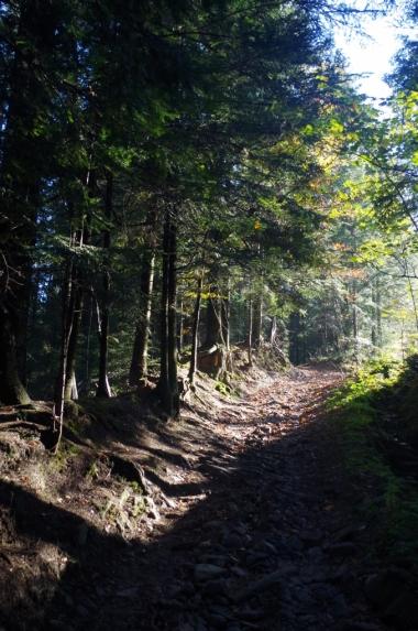 Szlak z Bieńkówki na Koskową Górę