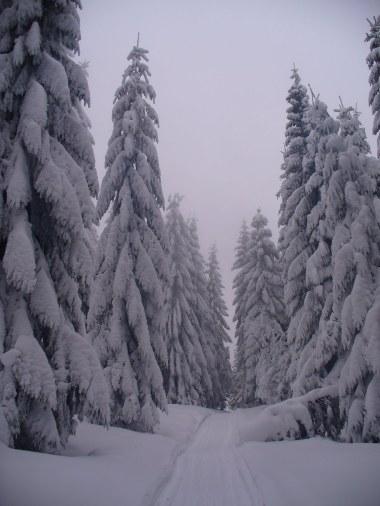 Na szlaku z Papieżówki na Jaworzynę Kamienicką, 17 I 2013