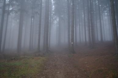 Na szlaku z Przegibka na Bendoszkę Wielką