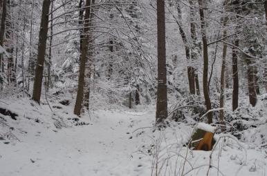 Z Pcimia przez las - początkowy odcinek szlaku