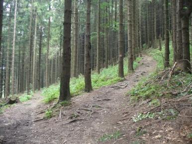 Na szlaku z Wielkiej Rycerzowej na Przegibek, zdjęcie wykonano 8 IX 2010 r.