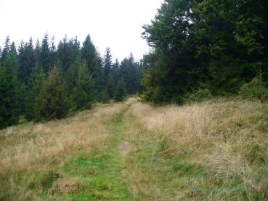Szlak między Praszywką Wielką, a Rycerką, zdjęcie wykonano 8 IX 2010 r.