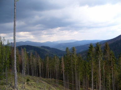 Widok ze szlaku w kierunku Pilska