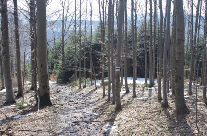 Na szlaku z Mogielicy na Przełęcz Przysłopek