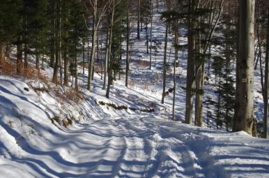 Na szlaku ze Starego Sącza na Prehybę