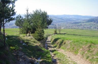 Na szlaku z Mszany Dolnej na Lubogoszcz