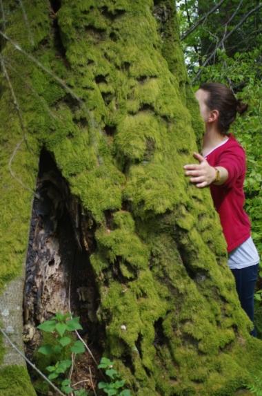 Jedno z drzew przy szlaku