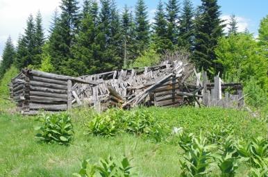 Ruiny szałasu na szlaku z Kudłonia do Lubomierza