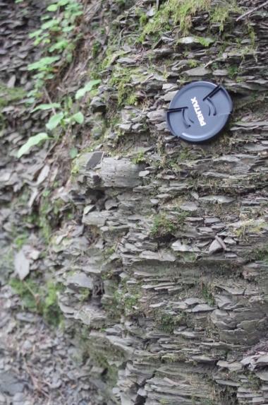 Flisz karpacki - widoczne przeważające łupki