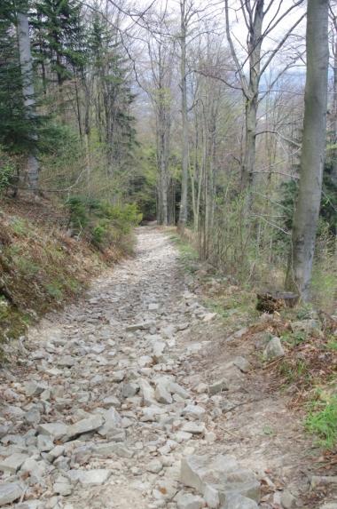 Szlak z Przełęczy Zasańskiej na Kamiennik