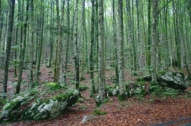 Las w okolicy Jeziora Bohinj
