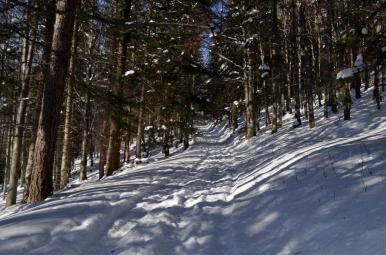 Na szlaku z Jurkowa na Ćwilin