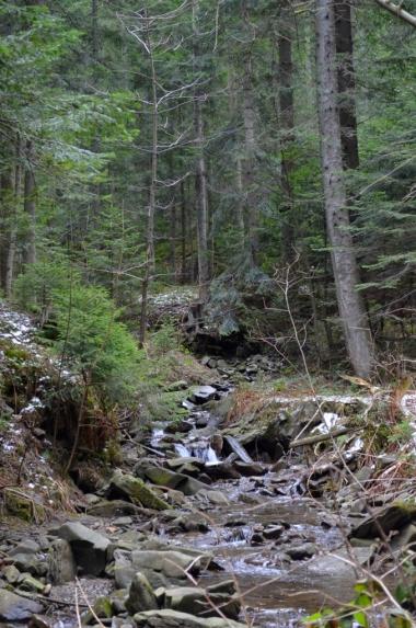 Potok Czarna Rzeka na szlaku z Mogielicy do Słopnic Królewskich, fot. Maja Cybulska