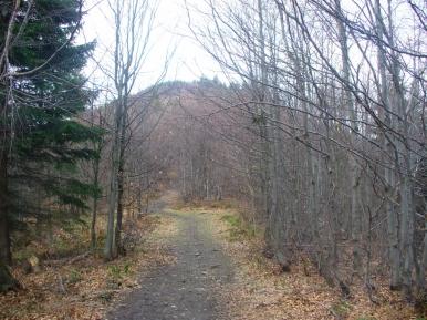 Na szlaku ze Słopnic Królewskich na Mogielicę, zdjęcie wykonano 2 IV 2011 r.