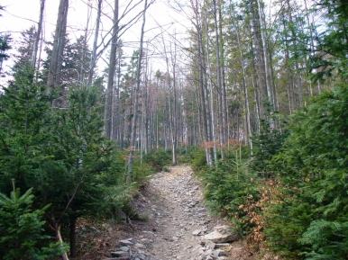 Zielony szlak z Przełęczy Rydza-Śmigłego na Mogielicę, zdjęcie wykonano 28 IV 2007 r.
