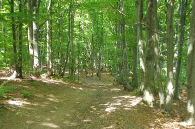 Na szlaku z Hali Uszczawne do Korbielowa