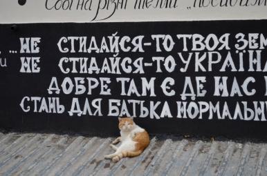 Odessa - miasto kotów